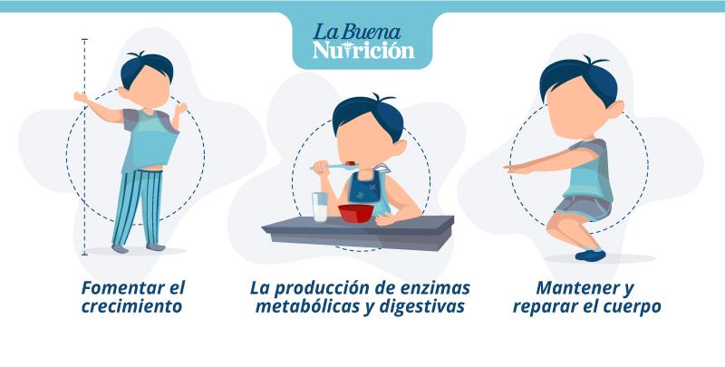 Cómo benefician las proteínas al organismo