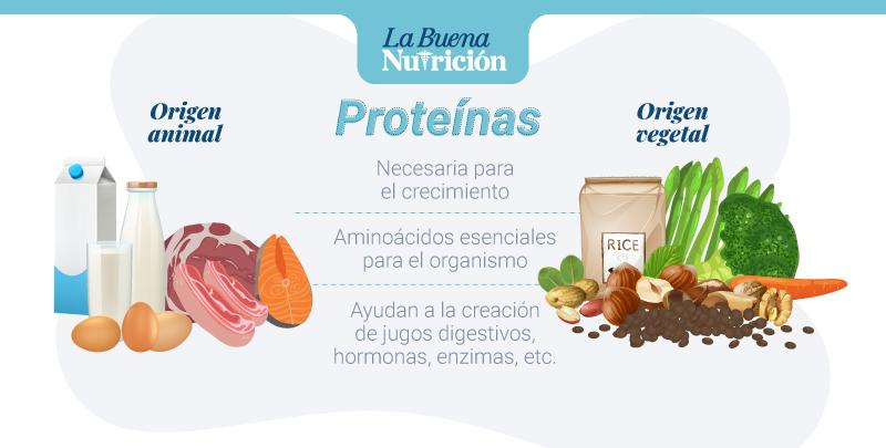 proteinas y su importancia